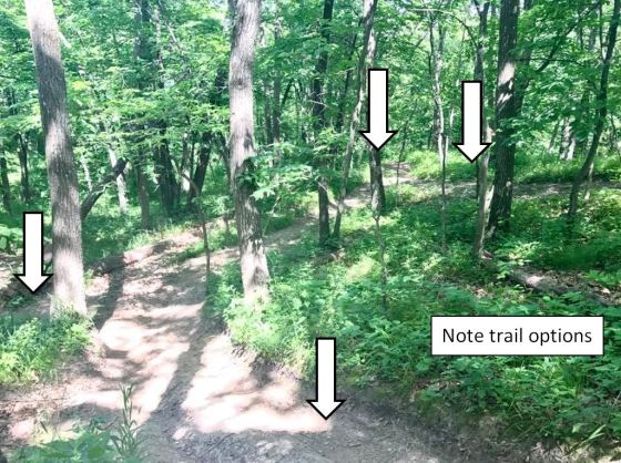 trail options